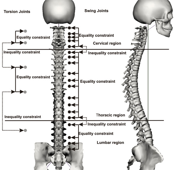 real-time joint coupling of the spine for inverse kinematics, Skeleton